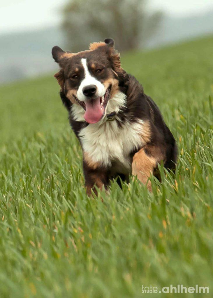 Fotostudio Ahlhelm Tiere Outdoor Hundesprint