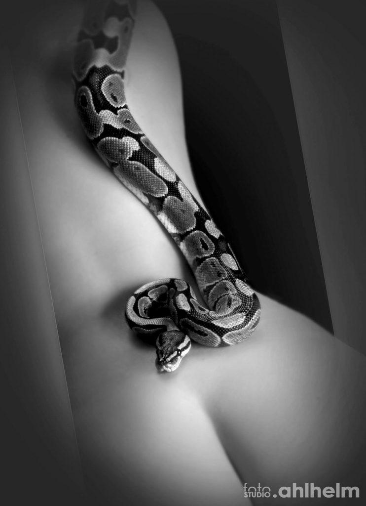 Fotostudio Ahlhelm Tiere Schlange auf Haut